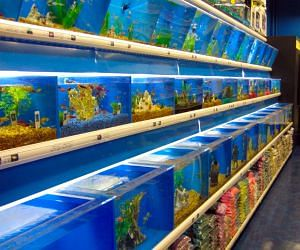 Pet Store Insurance Cost Coverage 2020